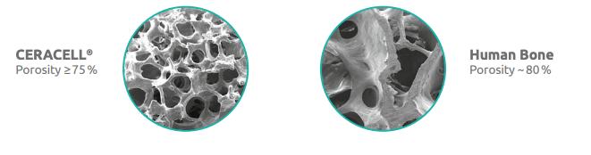 ceracell-biologics